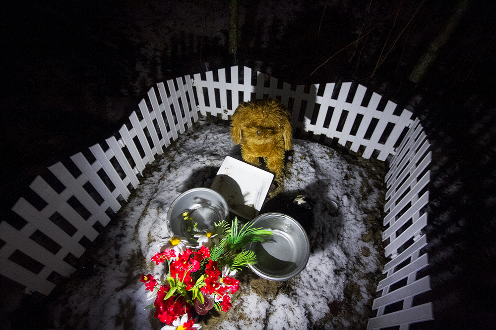 Кладбище домашних животных: как в Петербурге хоронят питомцев