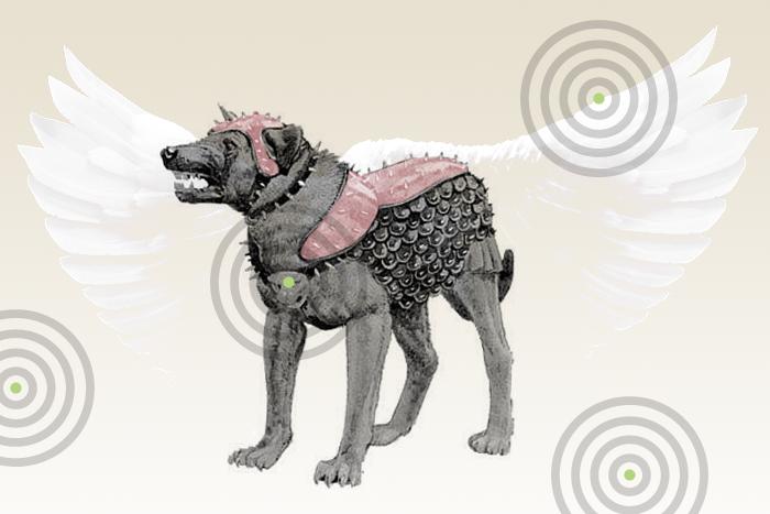Чем закончился «день догхантера» и как слухи про травлю собак охватили всю страну