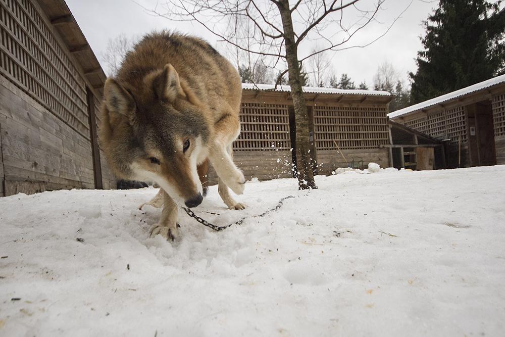 «Даже дикие животные принимают нашу политику»: десять историй зверей из приюта