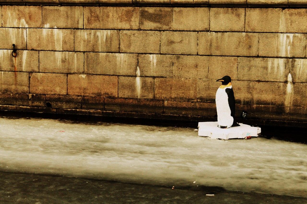 «Если чего-то в городе не хватает, япопробую это сделать»: создатель пингвина на канале Грибоедова — освоих работах
