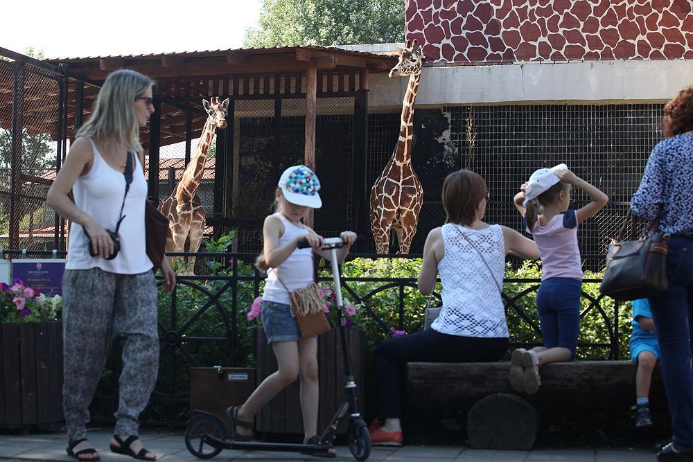 Как жирафа Соня подружилась с кенгуру и еще семь историй из Ленинградского зоопарка