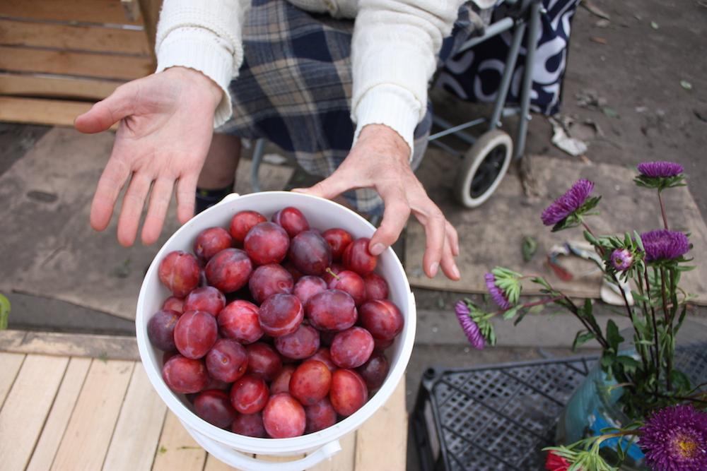 Петербургские бабушки рассказывают, как закатывать фрукты и овощи на зиму