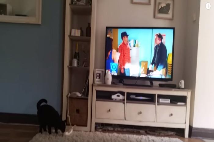 Отвечающий на телефонные звонки черный кот-«секретарь» стал звездой YouTube