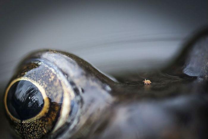 Как заработать 500 тысяч рублей, фотографируя бакланов? Подведены итоги  British Wildlife Photography Awards