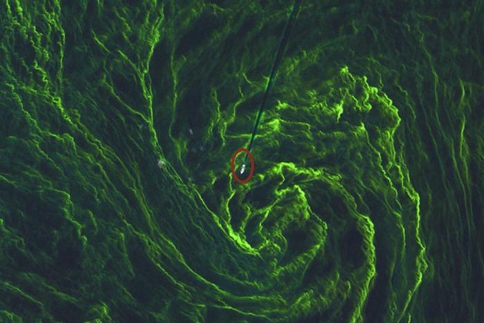 Спутник сфотографировал «мертвую зону» Балтийского моря, образованную цветущими водорослями