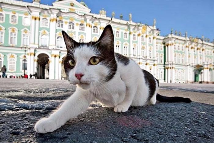 13 запахов Петербурга: кошки на Главпочтамте, хлеб на Чернышевского и гудрон на Американском мосту