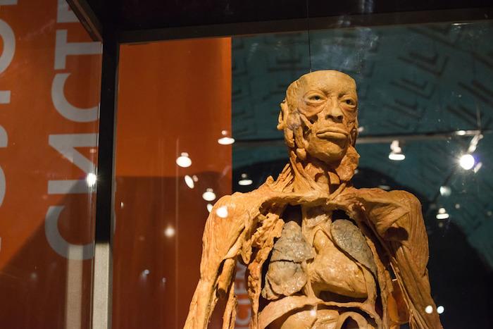 «С человеком все просто»: ученый-биолог объясняет, зачем показывать петербуржцам бальзамированные сердца и мозги