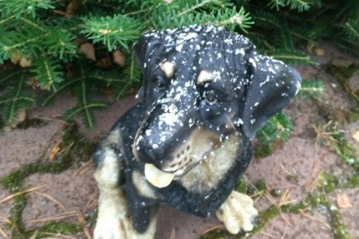 Первые заморозки и снег в Петербурге: 10 фотографий из Instagram