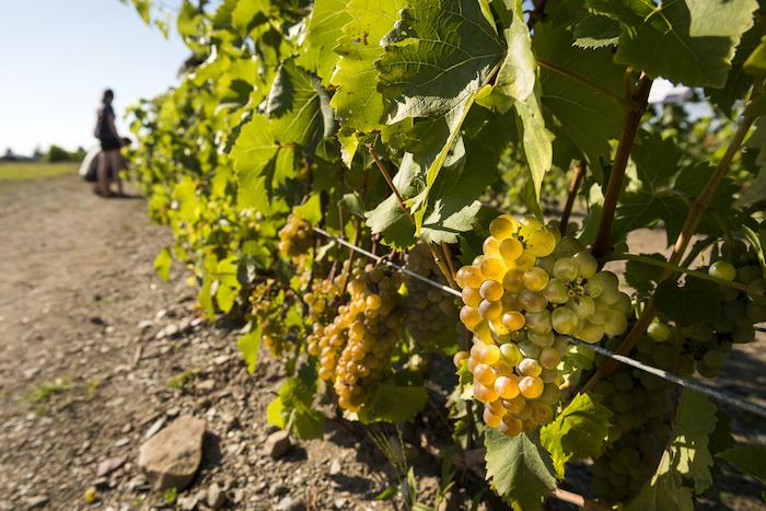Крымский винодел Павел Швец — овине, которое мы будем пить через пять лет