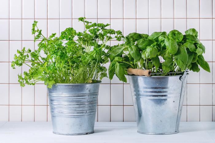 Сколько стоит вырастить на подоконнике укроп, базилик и другую зелень