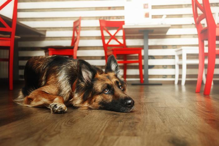 Десять кафе и ресторанов, куда пускают с псами разных размеров идругими питомцами