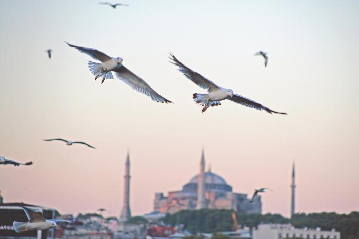 В правительство внесли проект об отмене запретов на чартеры в Турцию