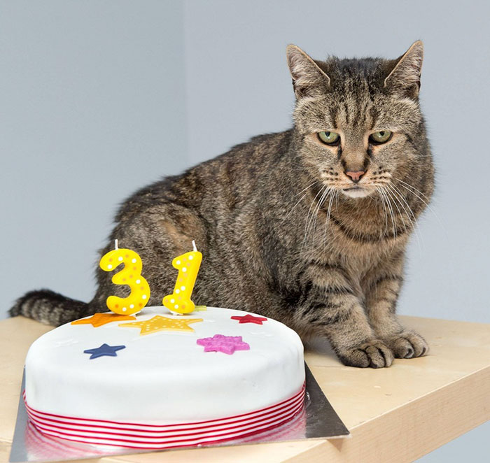 Самый старый кот вмире празднует 31-летие