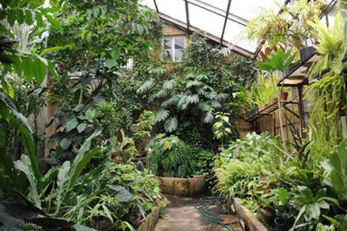 Ботанический сад предлагает стать куратором венериной мухоловки и носить ей мух