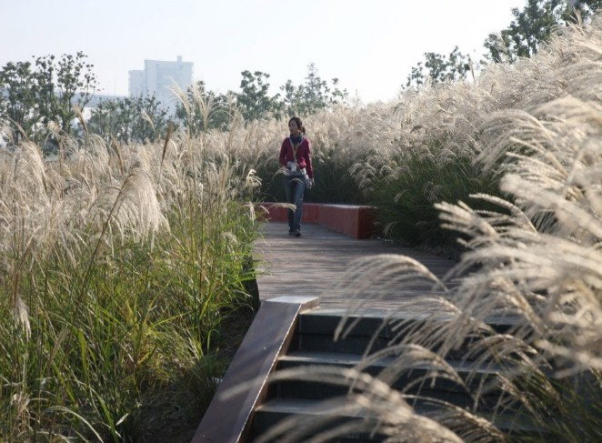 Парки созёрами иплощадками для наблюдения заптицами построят вПетербурге
