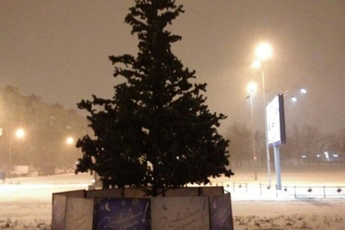 «Елка-перевертыш» и облезлое дерево из Веселого поселка — семь нелепых петербургских елок