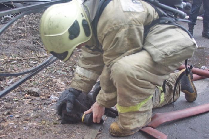 Спасли кота с пожара