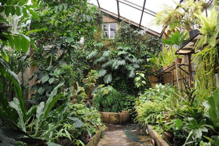 В Ботаническом саду пройдет серия концертов на открытом воздухе. Исполнят музыку Вивальди и Пьяццолы