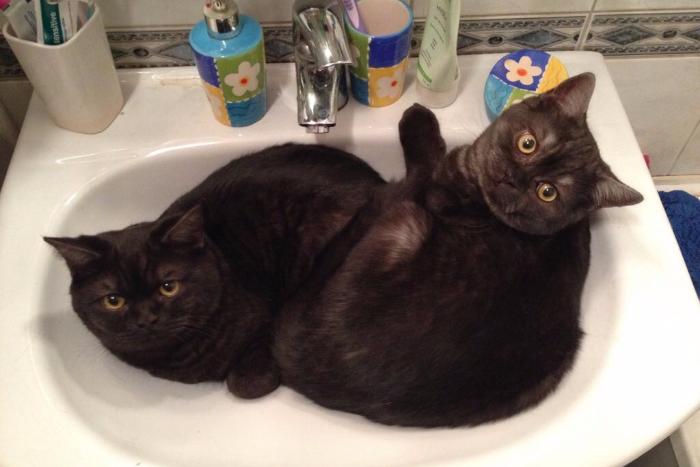 «Шерстью можно было бы выложить Дворцовую площадь»: как живут петербуржцы, у которых много котов