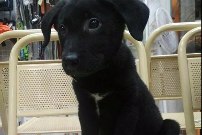 Фонд AdVita искал хозяев бездомному щенку, которого подарили онкобольному ребенку. Собаку пристроили за сутки 🐕