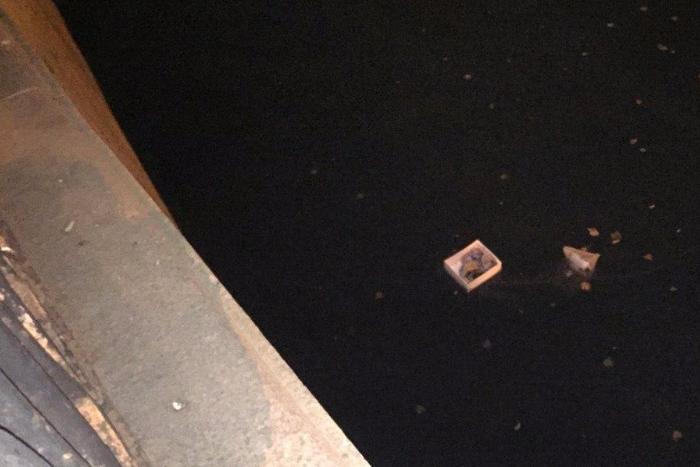 Слепые котята плыли по Карповке в картонной коробке. Петербуржец забрался в ледяную воду и спас их