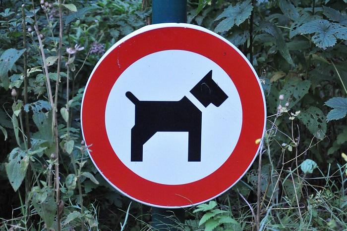 В парках и скверах поставили таблички о запрете выгула собак. Что говорят власти и штрафуют ли владельцев животных