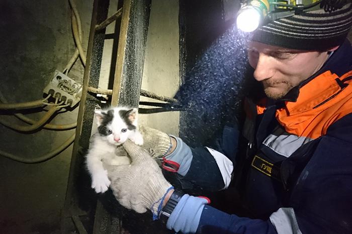 «Кот просидел на дереве девять дней»: как петербургские волонтеры спасают животных из шахт лифтов, рек и люков
