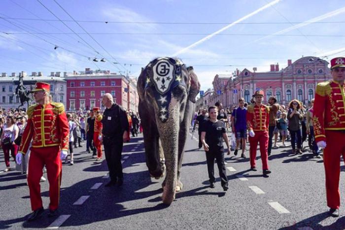 Слоны на Невском, кит в Ленобласти и утки в магазине. Посмотрите на майское нашествие зверей в Петербурге!