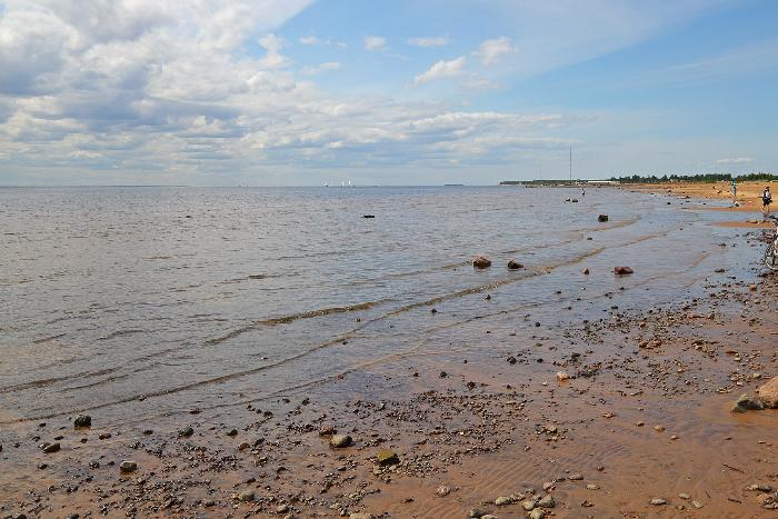 За выходные в Петербурге нашли 20 погибших тюленей