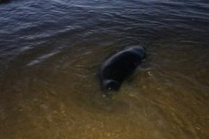 С начала сентября на берегу Финского залива находят мертвых тюленей. Ученые говорят, что смерти могут продолжиться