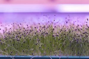 Микрозелень — это молодые ростки, которые добавляют в супы и салаты. Почему этот вид зелени стал модным и кто ее выращивает в Петербурге