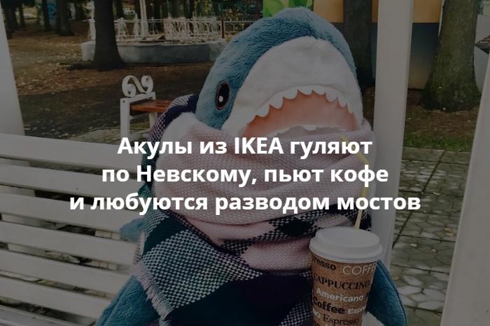 акулы из Ikea захватили петербург они гуляют по невскому любуются