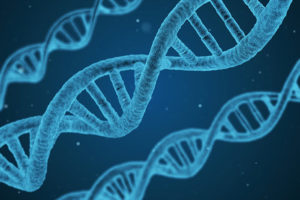 Как наследственность влияет на характер, интеллект и склонность к вредным привычкам и существует ли «ген агрессии»? Рассказывает генетик