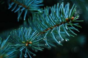 Где купить новогоднюю елку в Петербурге? От елочных базаров на окраинах до ярмарки на Новой Голландии