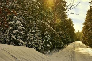 Где в Петербурге купить или бесплатно получить елку и куда сдавать деревья после Нового года?
