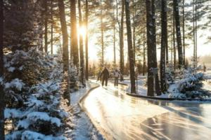 Девять петербургских катков — в сосновом лесу, на оленьей ферме и с видом на Финский залив