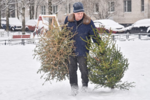 Новогодние елки в Петербурге можно будет сдать на переработку. Их будут использовать как подстилку для животных