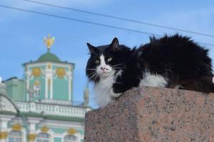 Эрарта, музей Ахматовой и другие учреждения выложили фотографии своих кошек. Этот флешмоб запустил эрмитажный кот Ахилл 🐱