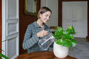 Почему домашние растения — это модно? Создательница проекта Plants For Friends рассказывает, зачем петербуржцы озеленяют дома и офисы и как ухаживать за цветами в горшках