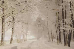 В марте в Петербург вернулась настоящая зима. Горожане лепят снеговиков на Дворцовой и пробираются по заснеженным улицам