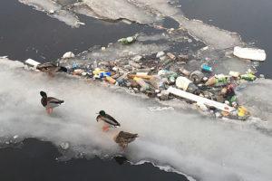 Почему в петербургских водоемах столько мусора и кто отвечает за его уборку?