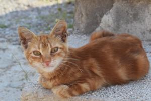 «Яндекс» запустил сервис для поиска пропавших домашних животных