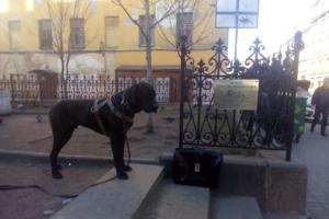 Петербуржцы установили в сквере Довлатова памятную табличку с писателем и фокстерьером Глашей