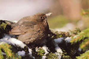 Как заняться бердвотчингом в Петербурге, где можно встретить редких птиц и зачем за ними наблюдать? Объясняет орнитолог