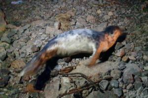 У берега Финского залива нашли самку тюленя. Она стала терять вес, и эксперты забеспокоились