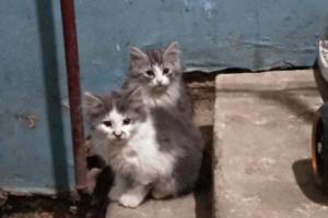 В подвале одного из офисов Исаакиевского собора нашли котят. Теперь сотрудники музея ищут им хозяев