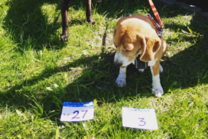 В Полюстровском парке петербуржцы устроили забег — с собаками! 🐶