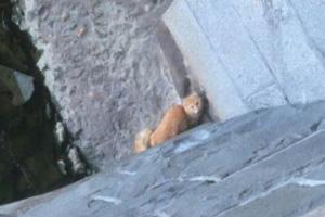 Зоозащитники сняли кота с выступа у воды на Обводном канале. Он не мог подняться наверх сам 😿