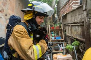 Как пожарные спасали кошек и собак из горевшего приюта на Васильевском острове. Девять фото