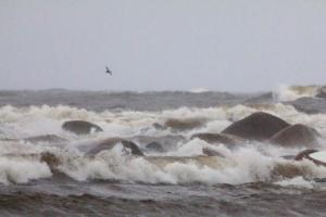 МЧС предупреждает петербуржцев об усилении ветра. Волны на Финском заливе вырастут до полутора метров